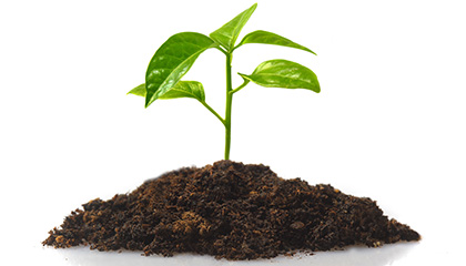 Planta brotando