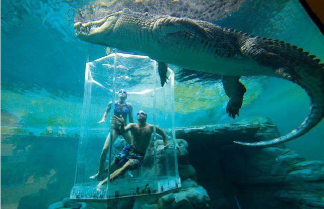 Crocosaurus Cove Aquarium - Austrália