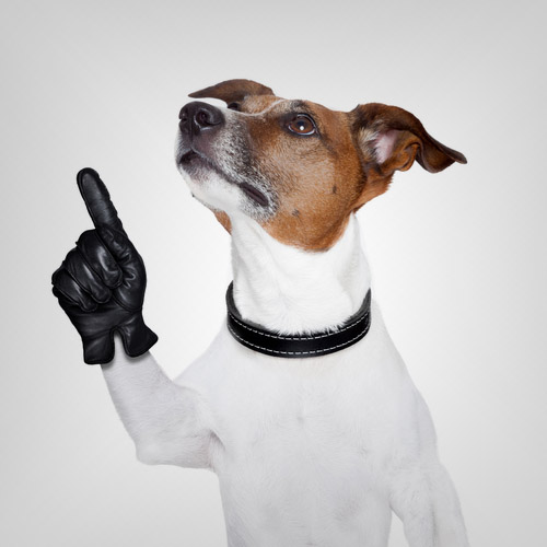 Como Agir Em Uma Entrevista de Emprego Pelo Telefone