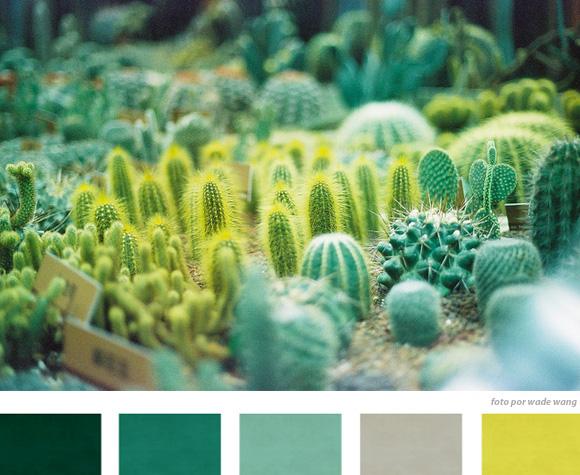 cactus e plantas desérticas