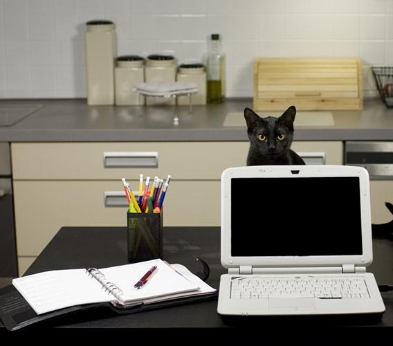 Veja o que fazer para trabalhar em casa com mais eficiência