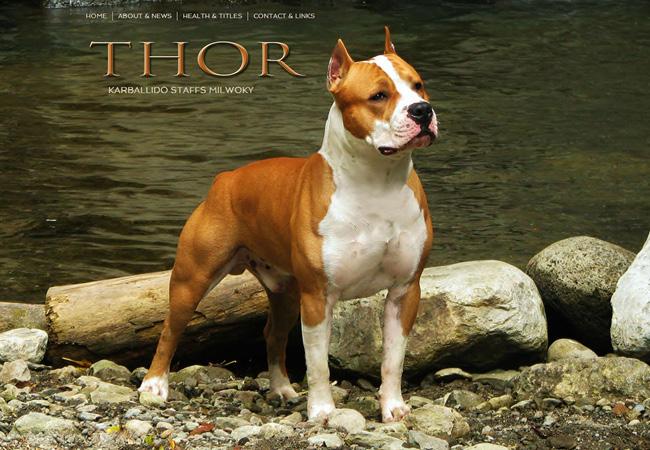 Amstaff Thor >>
