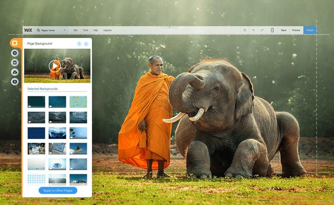 Imagens, Vídeos e Muito Mais: Confira Toda a Mídia Grátis Disponível no Editor Wix