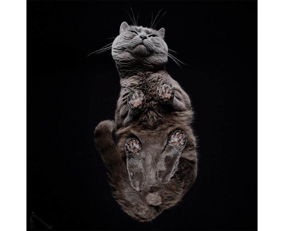 10 Fotógrafos que Capturaram com Perfeição Nossos Bichinhos
